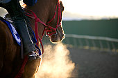 Race Horse Galloping-color