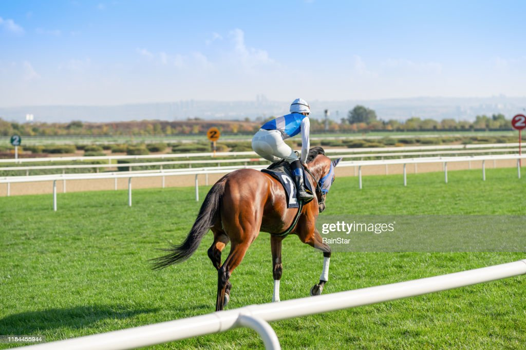 Race horse on the grass track. : Stock Photo