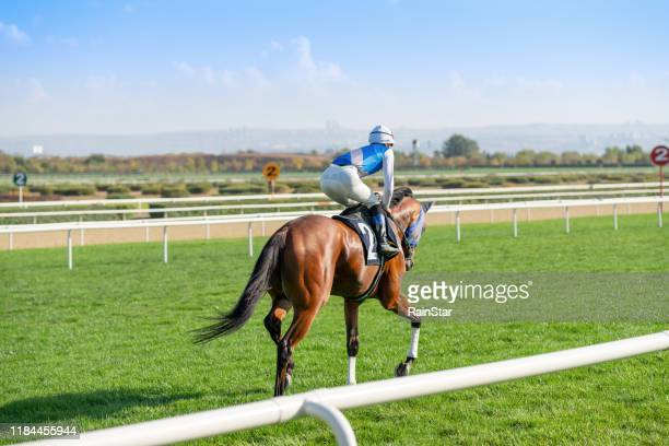 race horse on the grass track. - horse racing stock pictures, royalty-free photos & images