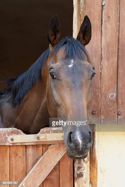 Pferd-Rennserie