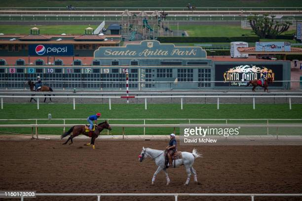 Race horses are seen during their morning workout at Santa Anita Park racetrack on June 15 2019 in Arcadia California Following criticism from...