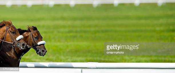 race horses running nose-to-nose - panorama - horse racing stock pictures, royalty-free photos & images