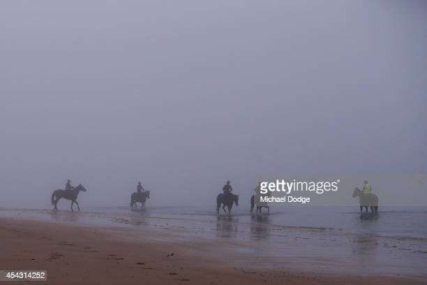 Race horses stroll through the heavy fog in the icy waters at Balnarring Beach on August 29 2014 in Melbourne Australia With the combination of high...