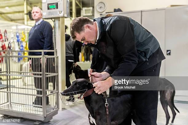 Race stewards at Wentworth Park on July 16 2016 in Sydney Australia Greyhound Racing in NSW has now resumed after a week suspension NSW Premier Mike...