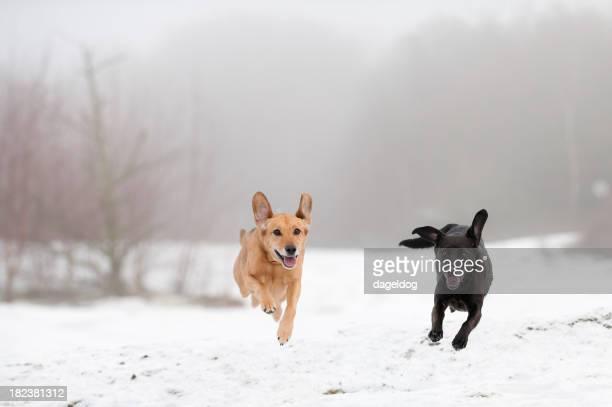 race through the snow