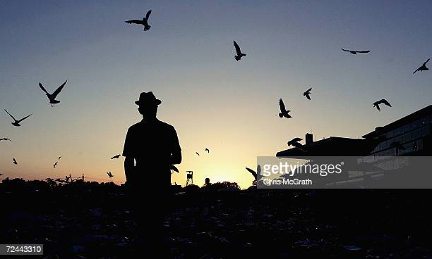 A racegoer watches seagulls as the sun sets on Flemington race course after the AAMI Victoria Derby Day at Flemington Racecourse October 30 2004 in...
