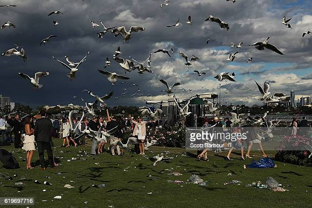 Racegoers leave the course as seagulls hover overhead following 2016 Melbourne Cup Day at Flemington Racecourse on November 1 2016 in Melbourne...