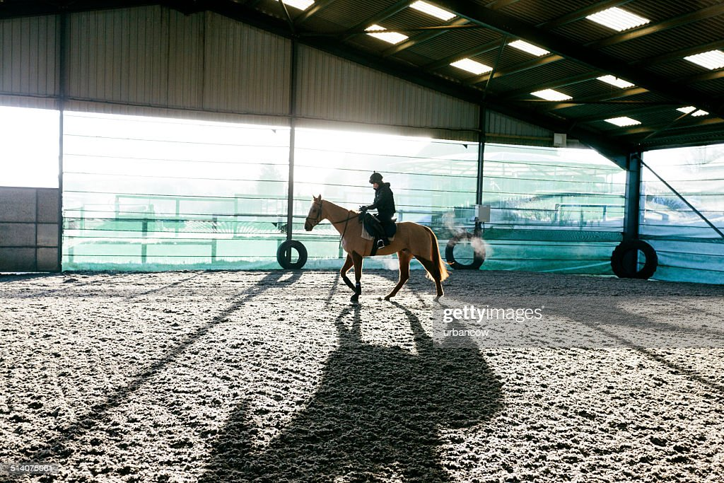 Racehorse, early morning exercise : Stock Photo