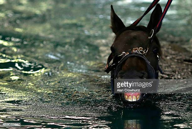Racehorse exercises in the pool at the Irish Equine Aqua Centre on the Curragh on September 13, 2015 in Kildare, Ireland.