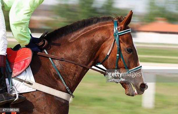 racehorse - thoroughbred horse stock pictures, royalty-free photos & images