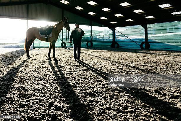 rennpferd, winter - racehorse stock-fotos und bilder