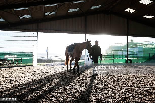Racehorse, winter