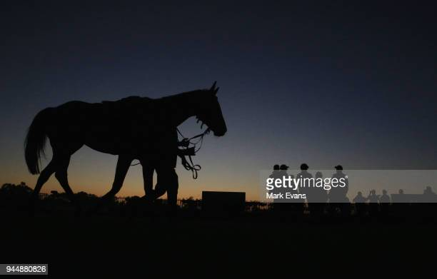 Racehorse Winx is paraded in the mounting yard after competing in an early morning gallop during a trackwork session at Rosehill Gardens on April 12...