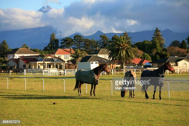 Racehorses at New Plymouth racetrack