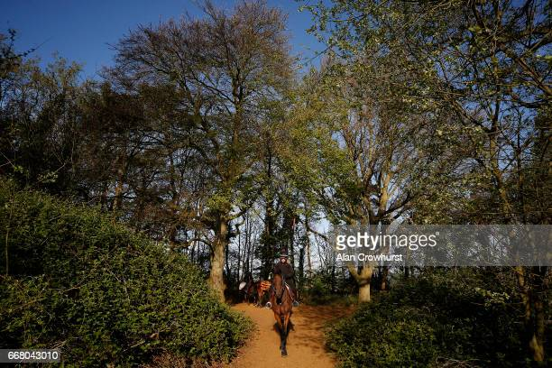 Racehorses make their way back to the yard after exercising on the Warren Hill gallops on April 13 2017 in Newmarket England