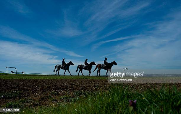 Racehorses make their way down Warren Hill after galloping on April 13 2016 in Newmarket England