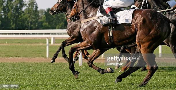 racehorses - horse racing stock pictures, royalty-free photos & images