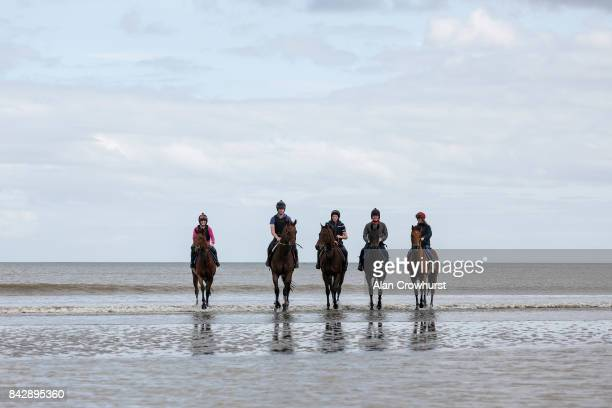 Racehorses take a stroll in the Irish Sea before racing at Laytown racecourse on September 5 2017 in Laytown Ireland Laytown racecourse is a horse...