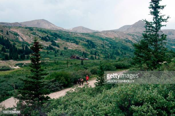 A racer makes his way along the trail during the 70th Annual Burro Days Race in Fairplay Colorado on July 29 2018 Racers equip their burro with a...
