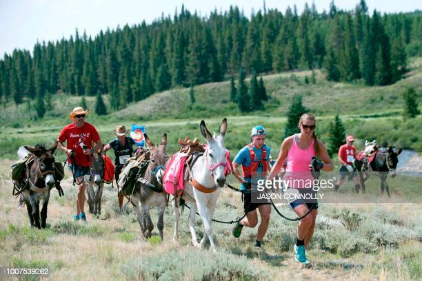 Racers run along the trail during the 70th Annual Burro Days Race in Fairplay Colorado on July 29 2018 Racers equip their burro with a pack saddle...