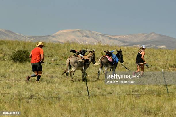 Racers run through fields as they take part in the 70th annual World Championship Pack Burro Race on July 29 in Fairplay Colorado Each runner must...