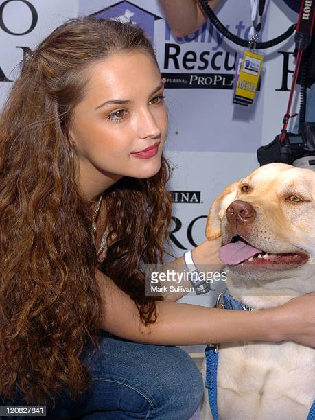 Rachael Leigh Cook during Purina's Rally To Resuce 2005 Purple Carpet at Barrington Recreational Center in Brentwood California United States