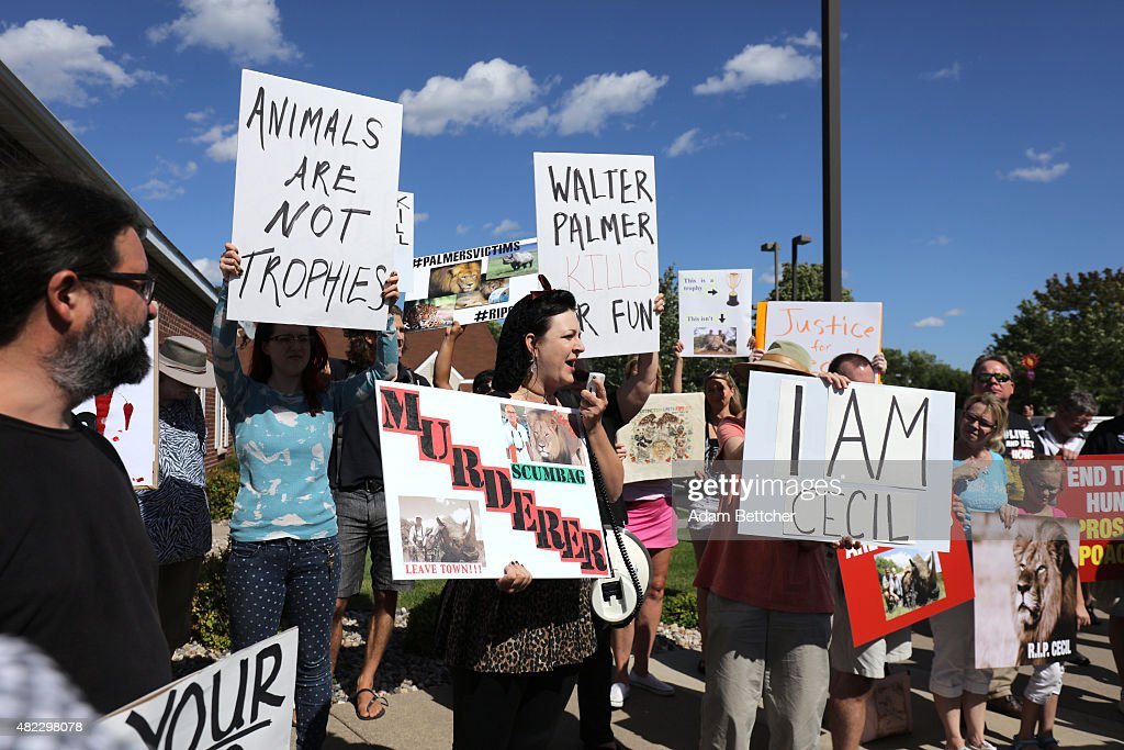 Rachel Augusta leads the protest of the killing of Cecil the lion in the parking lot of hunter Dr. Walter Palmer's River Bluff Dental Clinic on July 29, 2015 in Bloomington, Minnesota. According to reports, the 13-year-old lion was lured out of a national park in Zimbabwe and killed by Dr. Palmer, who had paid at least $50,000 for the hunt.