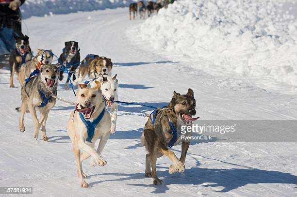 Racing Sled Dogs, Yellowknife.