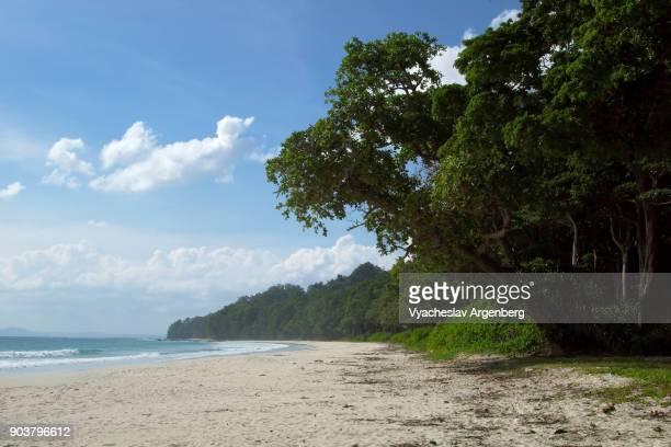 radhanagar beach, tropical havelock island, andamans - argenberg stock-fotos und bilder