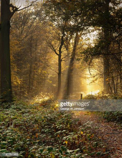 radiance ii - george wood stock pictures, royalty-free photos & images