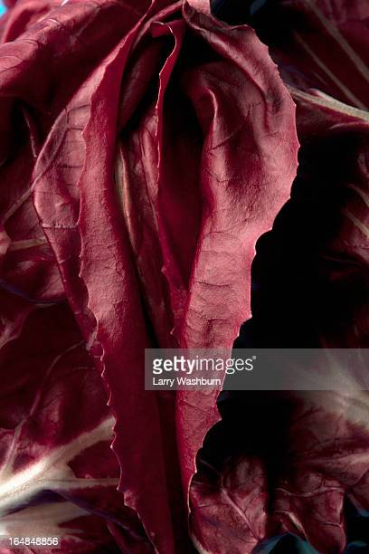 radicchio leaves arranged suggestively to look like female genitalia - descrever imagens e fotografias de stock