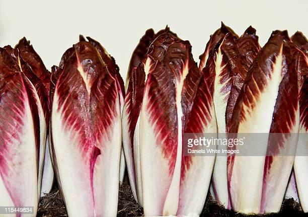 radicchio - chelsea flower show stock pictures, royalty-free photos & images
