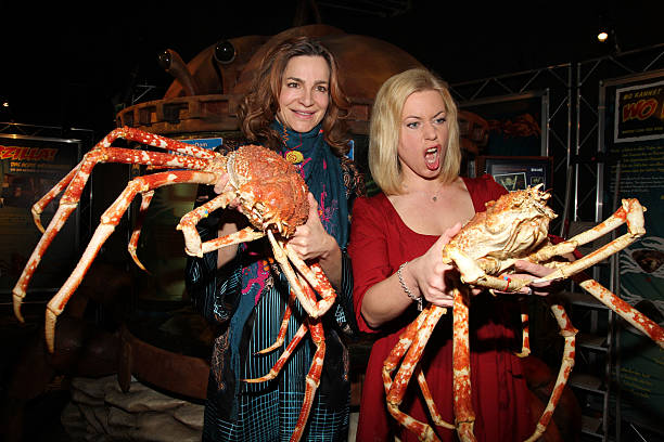 alexandra kamp welcomes spidercrabs at aqua dome sealife berlin photos and images getty images. Black Bedroom Furniture Sets. Home Design Ideas