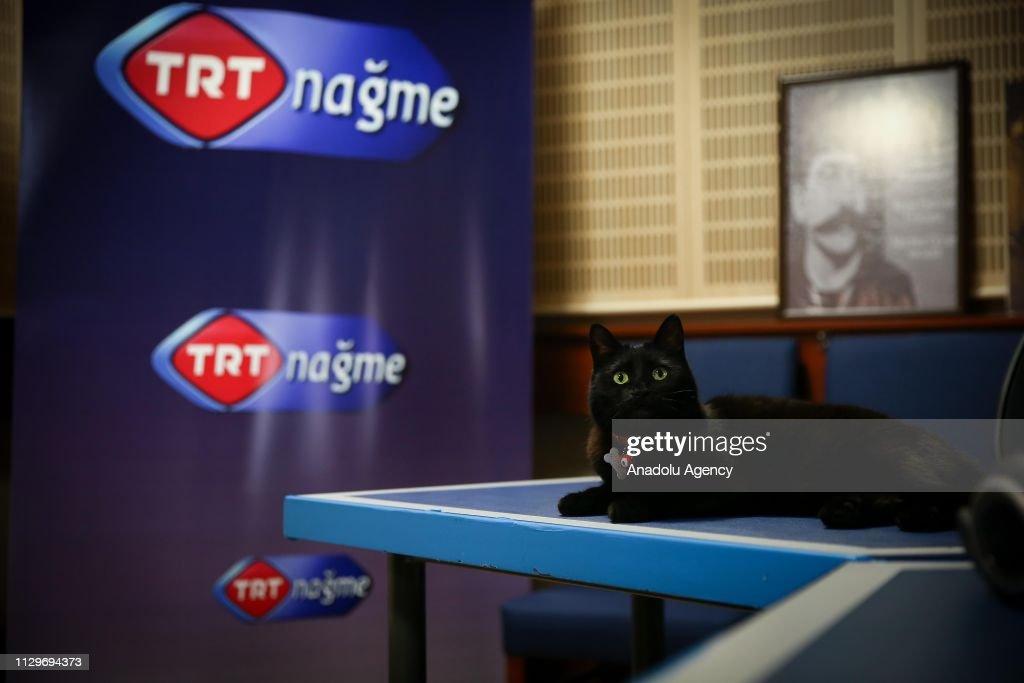 Radio producer Cigdem Isik's cat named 'Gece' meaning 'Night