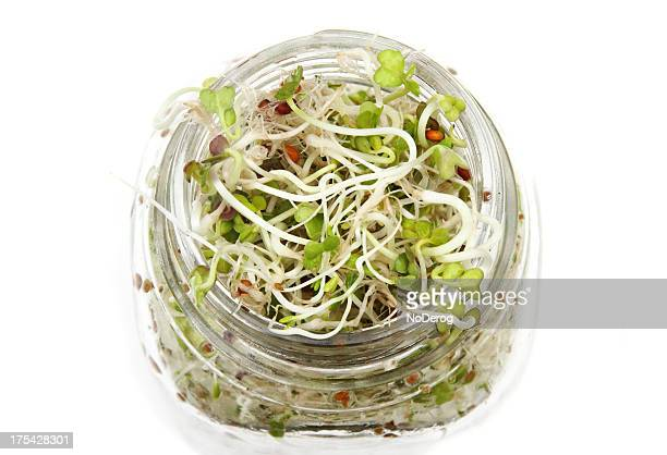 Radish and alfalfa sprouts