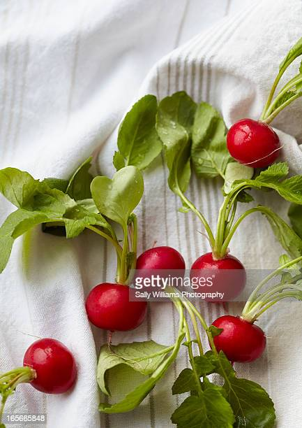 Radishes on a white stripped fabric