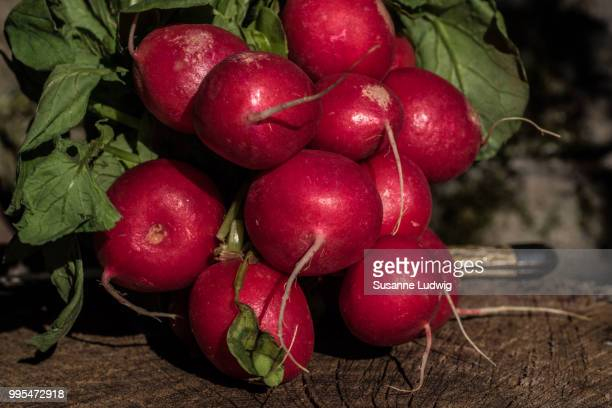 radishes - susanne ludwig stock pictures, royalty-free photos & images
