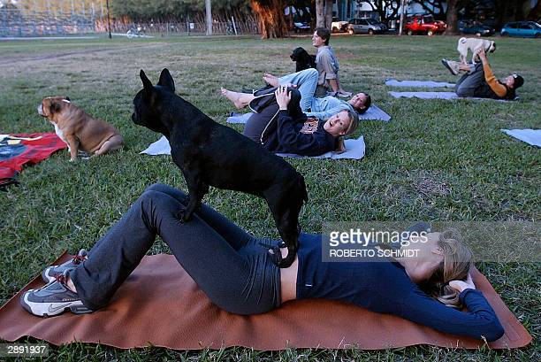 YOGA Raelene Mercer lies on her mat as her fiveyearold dog Montana balances on her body during a 'dog yoga' session at a local park in Miami Beach...