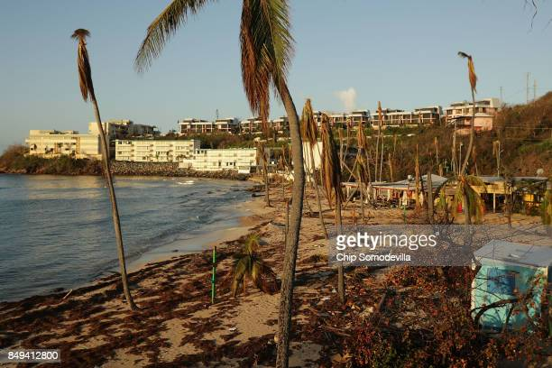 Rafts of seaweed and broken trees on the beach at the Bolongo Bay Beach Resort more than a week after Hurricane Irma made landfall, on September 18,...
