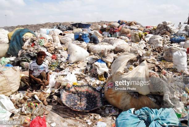 Rag picker collecting garbage in dumping ground, Deonar, Bombay Mumbai, Maharashtra, India