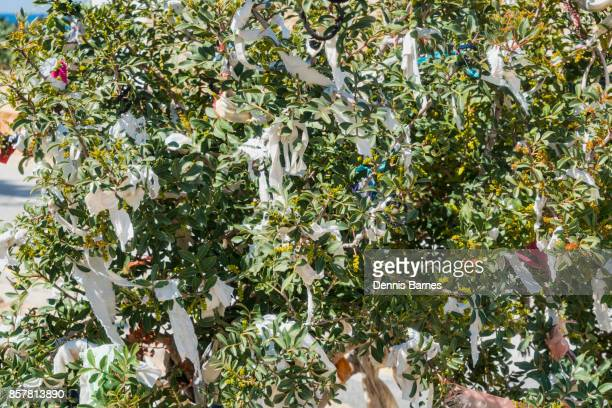 Rag prayer tree beside Agios Georgios church, Cyprus