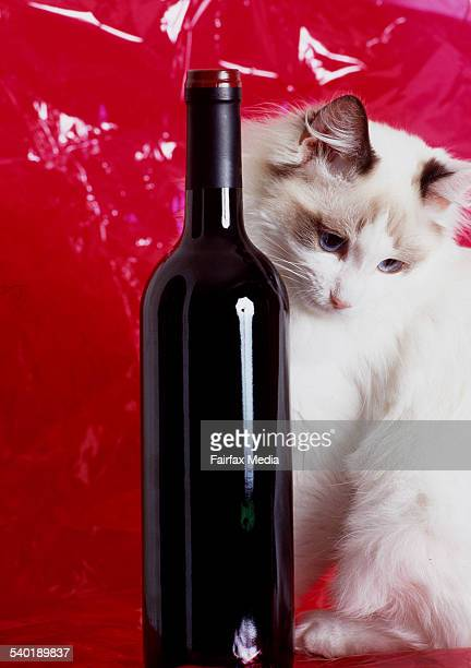 Ragdoll cat sitting beside a bottle of red wine