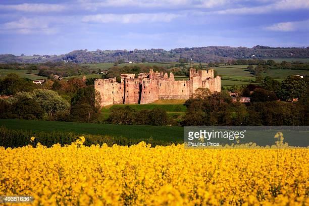 CONTENT] Raglan Castle from a Rape Field Raglan Monmouthshire Wales