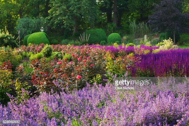 ragley hall summer garden - catmint stock pictures, royalty-free photos & images