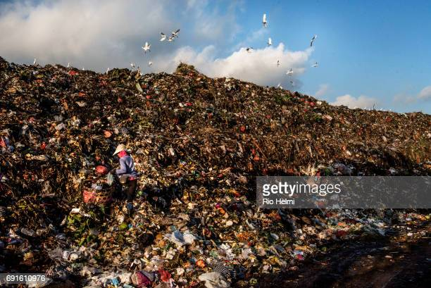 TEMESI GIANYAR BALI INDONESIA A ragpicker/scavenger is almost hidden as she works her way rapidly through new incoming loads of rubbish for higher...