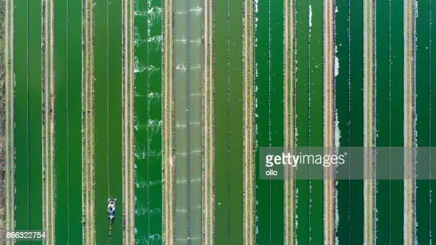 Ragworm cultivation farm - aerial view