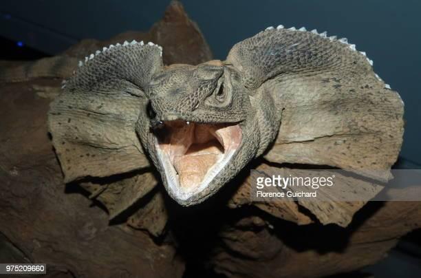 rahhhhh - dinosaure photos et images de collection