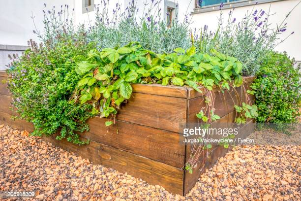 raided beds in an urban garden growing plants herbs spices berries and vegetables. - pot plant stock pictures, royalty-free photos & images