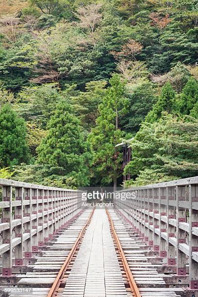 Rail Bridge on Jomon Sugi trail, Yakushima, Japan