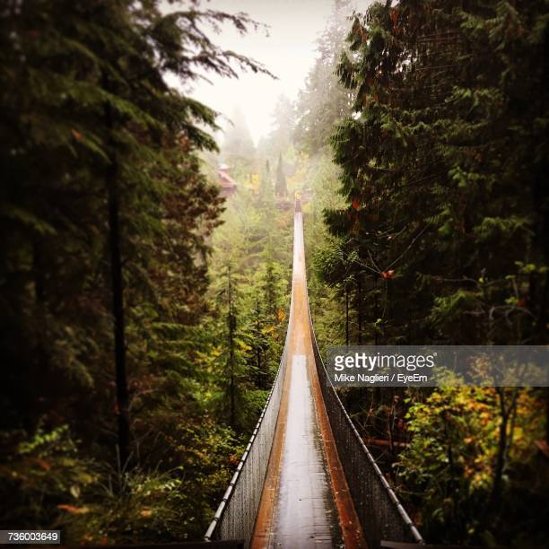 Railroad Track Amidst Trees In Forest